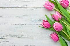 Tulipanes rosados en un fondo blanco imagenes de archivo