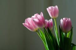 Tulipanes rosados en un fondo negro Foto de archivo libre de regalías