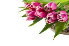 Tulipanes rosados en una cesta, en un fondo blanco, hay un lugar para una inscripción imagen de archivo