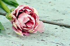 Tulipanes rosados en una superficie de madera Imagen de archivo