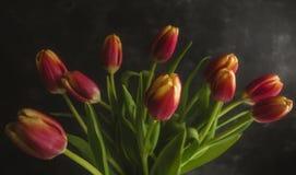Tulipanes rosados oscuros Foto de archivo libre de regalías