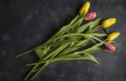 Tulipanes rosados y amarillos Imagen de archivo