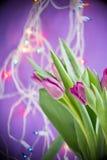 Tulipanes sobre el fondo ultravioleta Fotos de archivo