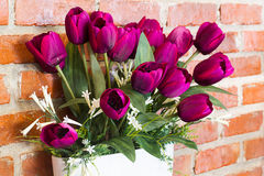 Tulipanes violetas Foto de archivo