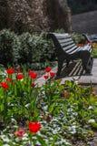 Tulipanes y banco en parque de la ciudad Imagenes de archivo