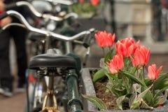 Tulipanes y bici de Amsterdam Imagen de archivo libre de regalías