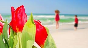 Tulipanes y cabritos en la playa fotografía de archivo