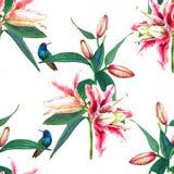 Tulipanes y colibríes inconsútiles del modelo Imagen de archivo
