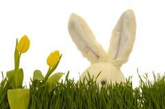 Tulipanes y conejito de pascua Imágenes de archivo libres de regalías