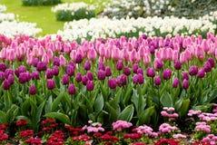 Tulipanes y flores rosados en un campo imágenes de archivo libres de regalías