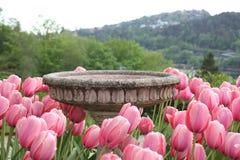 Tulipanes y fuente de agua Imagen de archivo libre de regalías