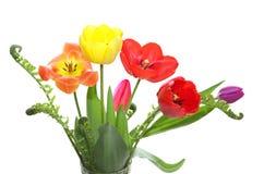 Tulipanes y helecho fotografía de archivo