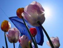 Tulipanes y lavadero Imágenes de archivo libres de regalías