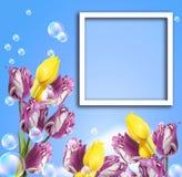 Tulipanes y marco de la foto Imagenes de archivo