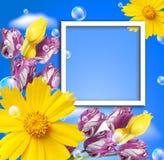 Tulipanes y marco de la foto Fotografía de archivo libre de regalías