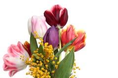 Tulipanes y mimosa Imágenes de archivo libres de regalías