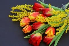 Tulipanes y mimosa anaranjados frescos en fondo oscuro Foto de archivo libre de regalías