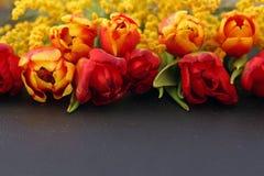 Tulipanes y mimosa anaranjados frescos en fondo oscuro Imagen de archivo libre de regalías