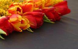 Tulipanes y mimosa anaranjados frescos en fondo oscuro Imagen de archivo