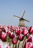 Tulipanes y molino de viento Imagenes de archivo