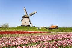 Tulipanes y molino de viento 5 Imágenes de archivo libres de regalías