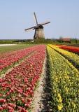 Tulipanes y molino de viento 6 Foto de archivo