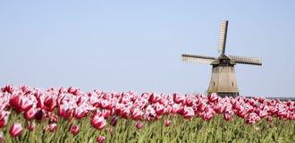 Tulipanes y molino de viento 7 Foto de archivo