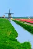 Tulipanes y molino de viento Fotos de archivo libres de regalías