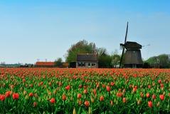 Tulipanes y molino de viento Imagen de archivo