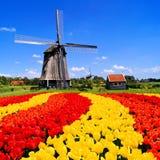 Tulipanes y molino de viento holandeses Fotos de archivo