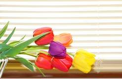Tulipanes y persianas imagen de archivo