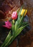 Tulipanes y roca fotos de archivo libres de regalías