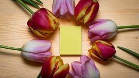 Tulipanes y texto de la tarjeta gratis Imagen de archivo libre de regalías