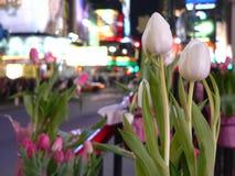 Tulipanes y Times Square imagenes de archivo