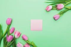 Tulipanes y trozo de papel rosados frescos brillantes en fondo verde claro Imágenes de archivo libres de regalías