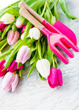 Tulipanes y utensilios de jardinería de la primavera Foto de archivo