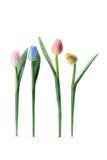 Tulipani Fotografia Stock