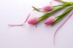 Tulipani abbastanza dentellare con il nastro immagini stock libere da diritti
