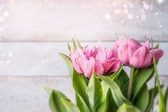 Tulipani abbastanza rosa che fioriscono sul fondo di legno leggero, vista frontale immagine stock