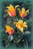 Tulipani arancio di alta qualità fotografia stock