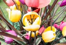 Tulipani artificiali Immagini Stock Libere da Diritti