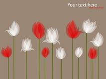 Tulipani bianchi Fotografie Stock