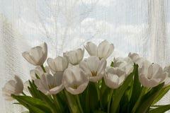 Tulipani bianchi al sole Immagini Stock