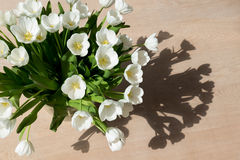 Tulipani bianchi al sole Fotografia Stock Libera da Diritti