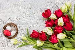 Tulipani bianchi e rossi ed uova di Pasqua decorative Fondo di Pasqua, spazio della copia Fotografie Stock Libere da Diritti