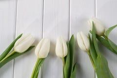 Tulipani bianchi su fondo di legno bianco Immagini Stock Libere da Diritti