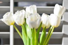 Tulipani bianchi in un vaso Immagini Stock Libere da Diritti