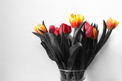 Tulipani in bianco e nero con i germogli di fiore colorati Fotografia Stock