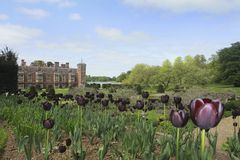 Tulipani a Blicking fotografia stock
