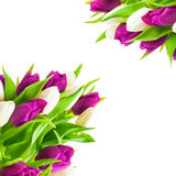 Tulipani, cartolina d'auguri Fotografia Stock Libera da Diritti